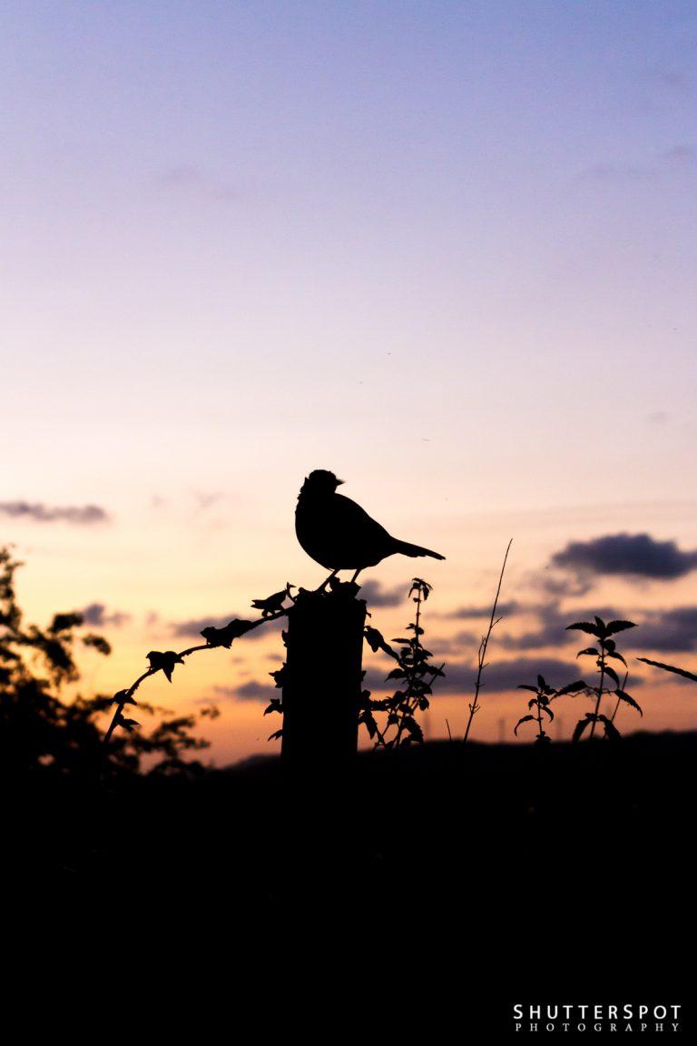 Sunset Visitor